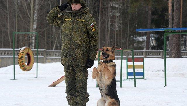 Курсант со служебной собакой породы немецкая овчарка. Архивное фото.