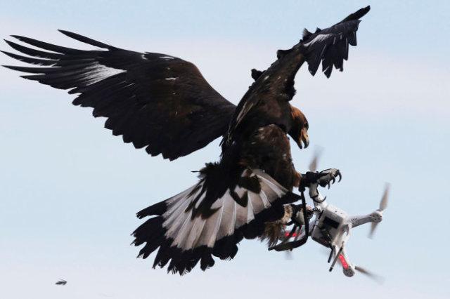 Закон позволяет силовикам сбивать дроны нарушителей, а каким именно способом, те решат сами.